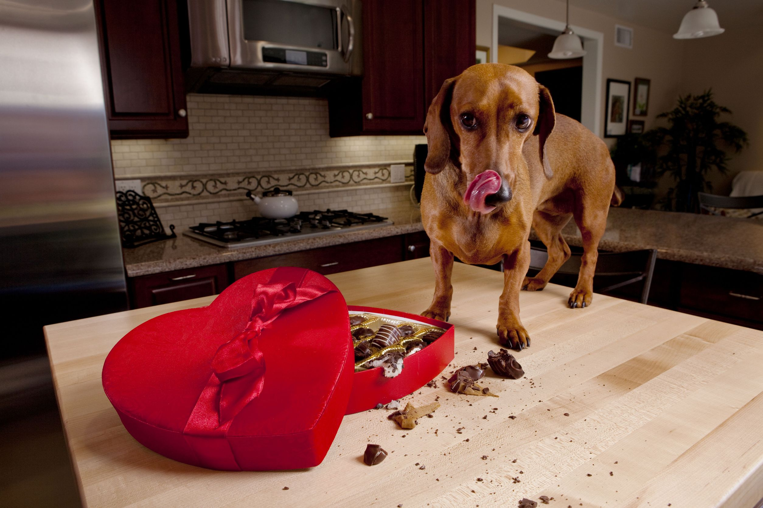 dog eating feces