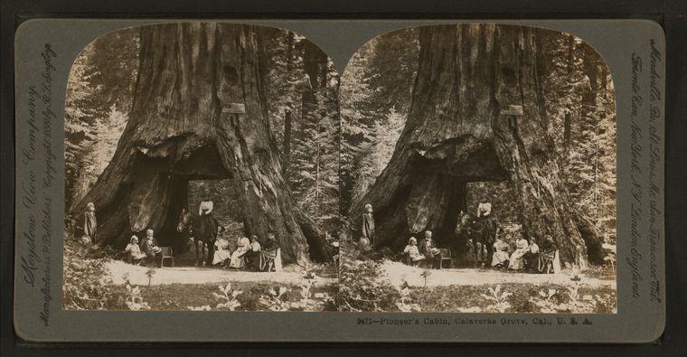 Pioneer's_Cabin,_Calaveras_Grove,_Cal.,_U._S._A.,_by_Singley,_B._L._(Benjamin_Lloyd)